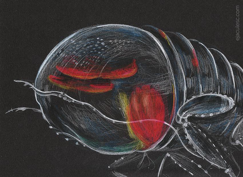 30052015-amphipod-1